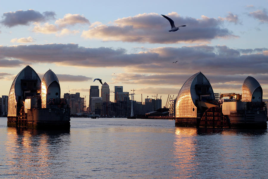 Thames Barrier and seagulls by Helga Novelli