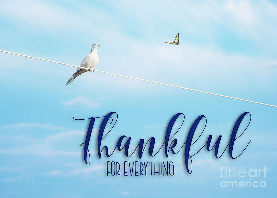 Thankful for Everything by Mechala Matthews