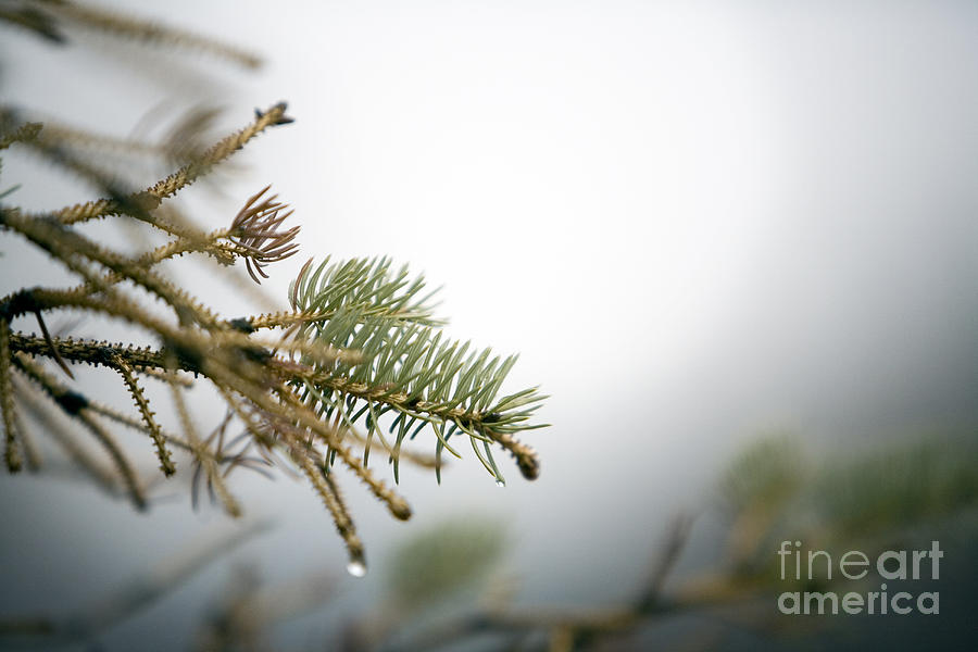 Winter Photograph - Thaw by Jeannie Burleson