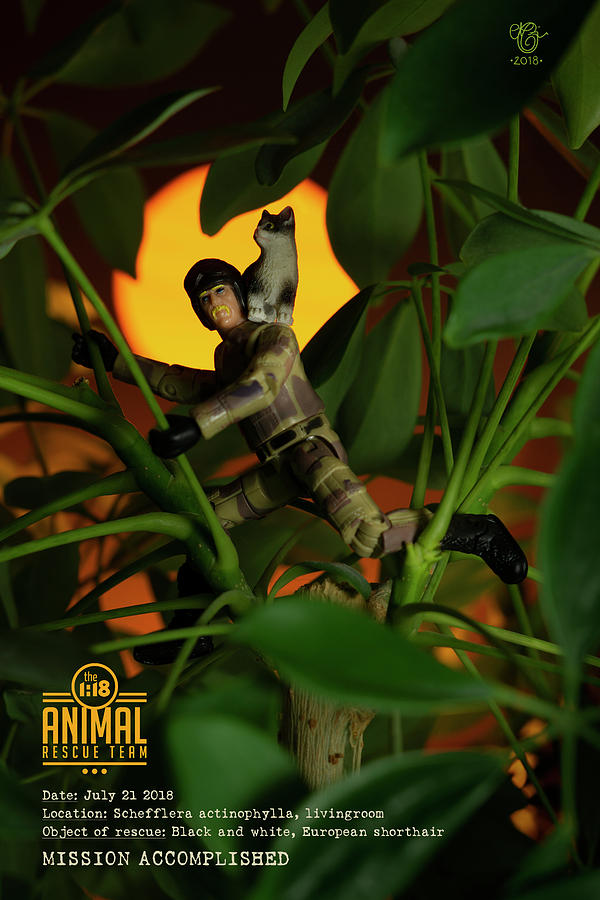 Miniature Photograph - The 1-18 Animal Rescue Team - Cat In Jungle by Martine Carlsen