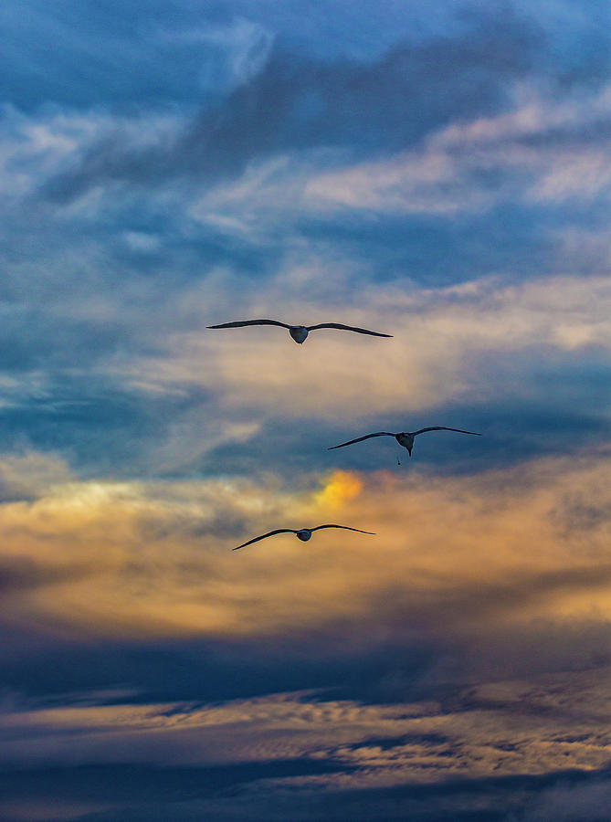 The 3 by Mike Trueblood