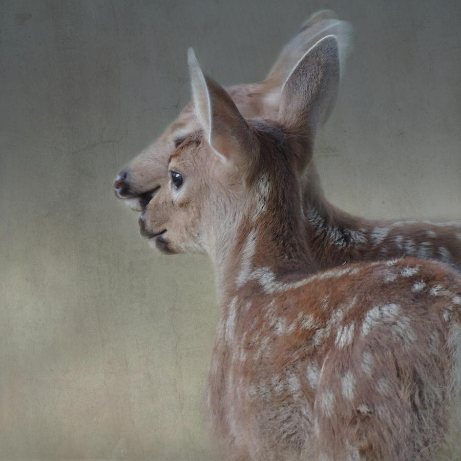 Fawn Photograph - The Adoration by Sally Banfill
