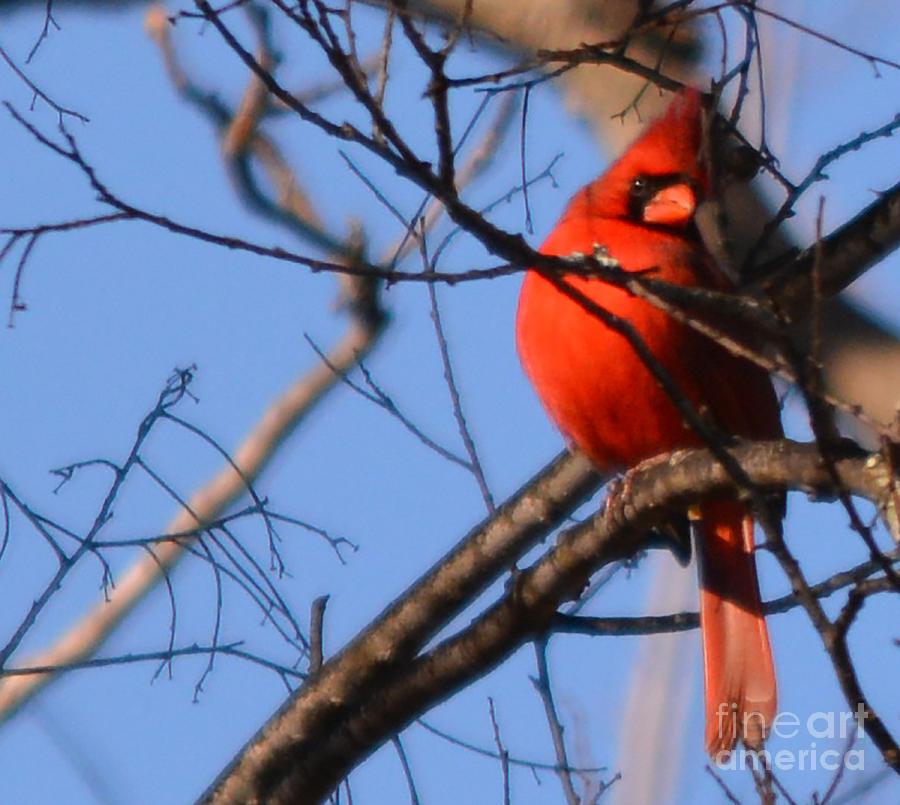 The Alfa Bird by Barb Dalton