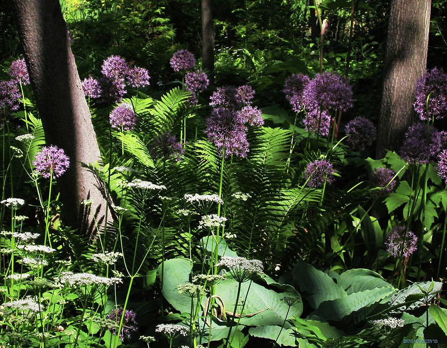 Trees Photograph   The Allium Garden By Garth Glazier
