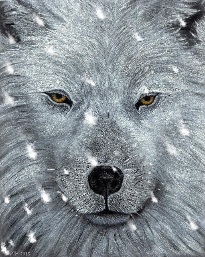 Wolf Drawing - The Amber Eyed Wolf by Philip Harvey