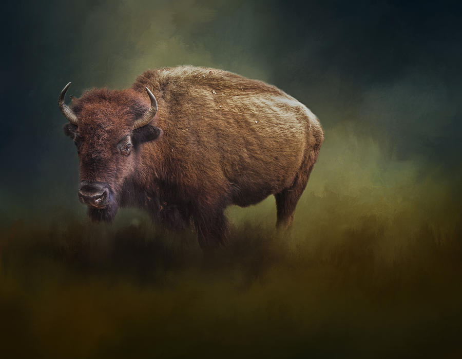 America Photograph - The American Bison by David and Carol Kelly