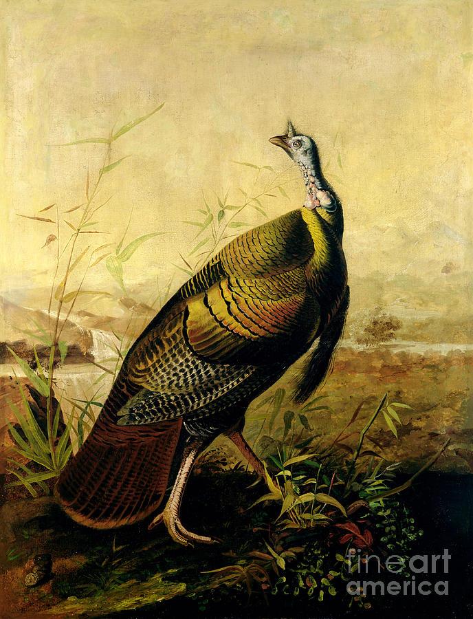 Turkey Painting - The American Wild Turkey Cock by John James Audubon