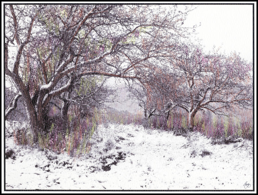 Apples Photograph - The Apples of Rattlesnake Vale by Wayne King