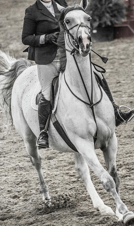 Horse Photograph - The Approach Show Jumping by Betsy Knapp