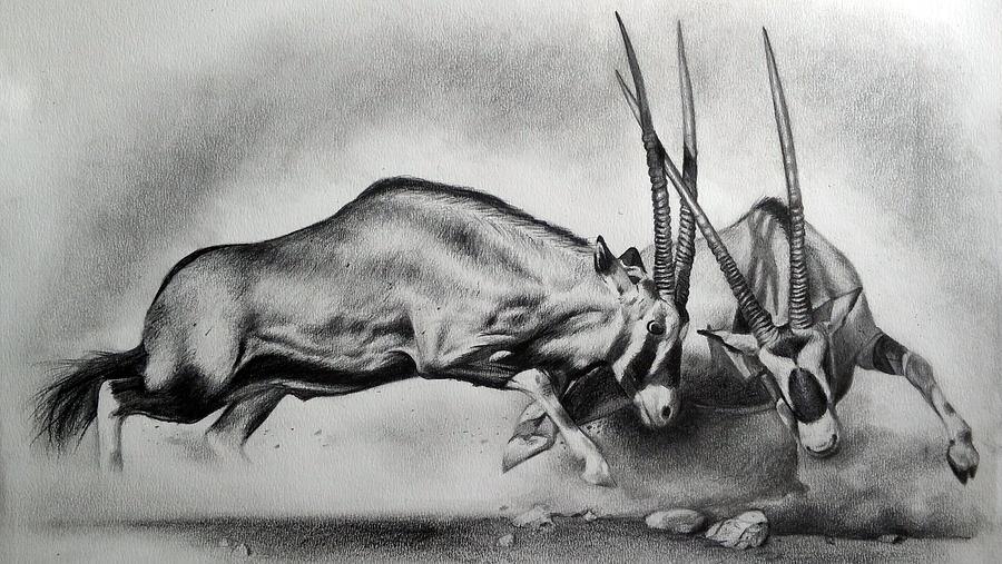 The Arabian Oryx