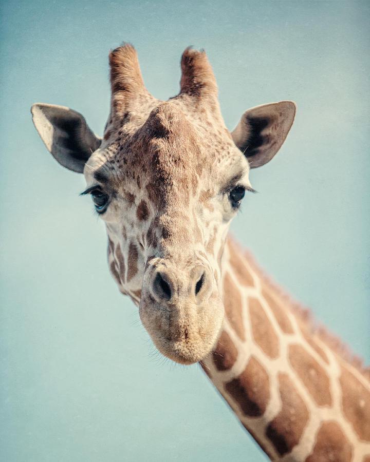 Giraffe Photograph - The Baby Giraffe by Lisa R