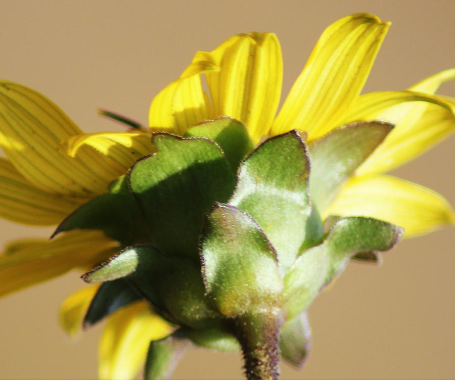 Floral Photograph - The Back Of Beauty by Lori Mellen-Pagliaro