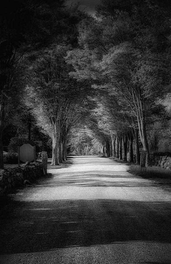 The Backroad Photograph by James Caine