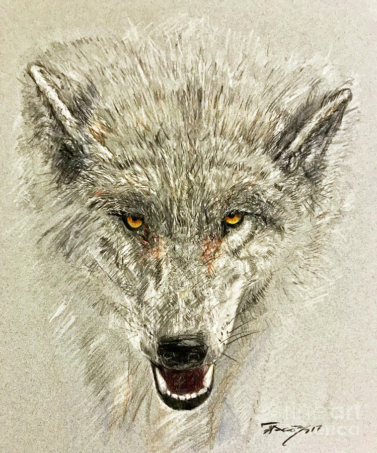Wolves Drawing - The Balance by Kevin Scott Jacobs