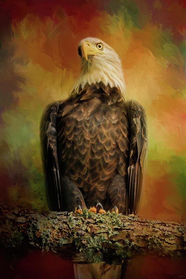 Jai Johnson Photograph - The Bald Eagle In Autumn by Jai Johnson