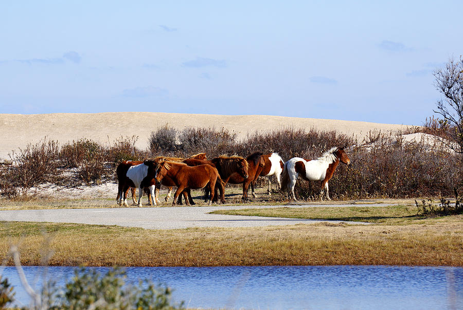 The Beach Herd Photograph by Ann Keisling