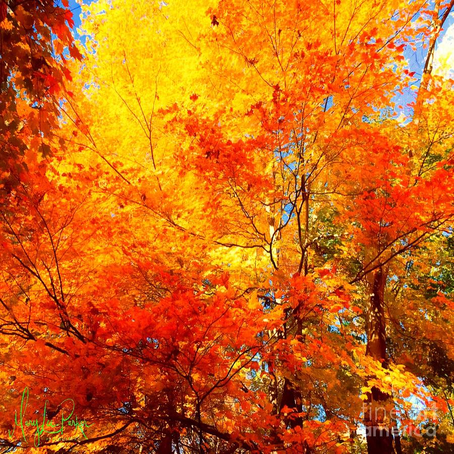 Trees Painting - The  Beauty Of Autumn by MaryLee Parker
