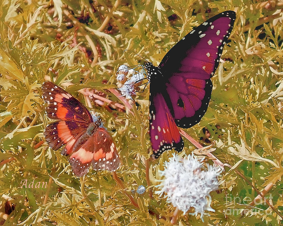 Butterflies Photograph - The Beauty Of Sharing - Gold by Felipe Adan Lerma