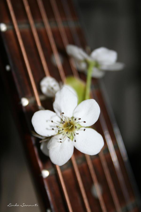 Still Life Photography Photograph - The Beauty Of Strings by Linda Sannuti