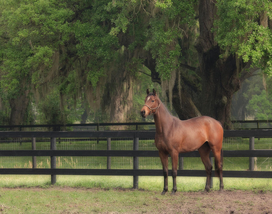 Thoroughbred Photograph - The Beauty Of The Thoroughbred by Eleszabeth McNeel