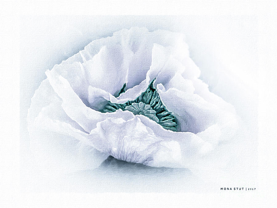 Nature Digital Art - The Beauty Of White Poppy by Mona Stut