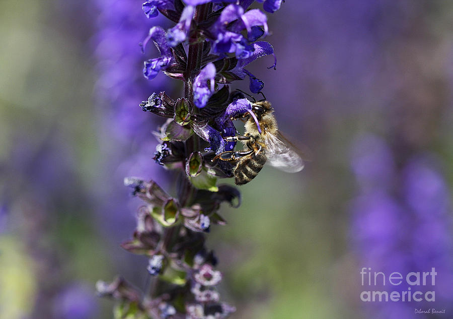 Bee Photograph - The Bee Hover by Deborah Benoit