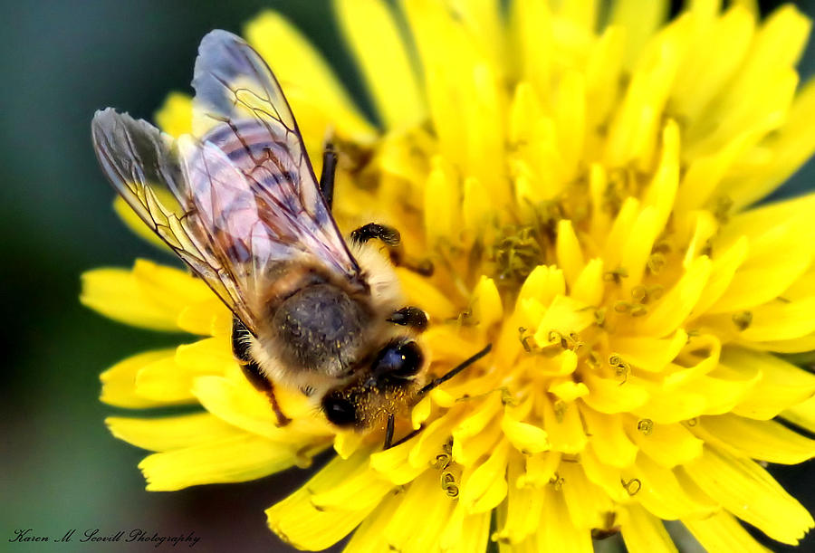Macro Photograph - The Bee by Karen Scovill