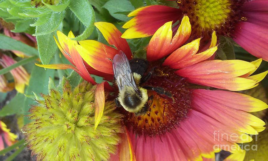 Flower Photograph - The Bee Keeper by Lesley Wood
