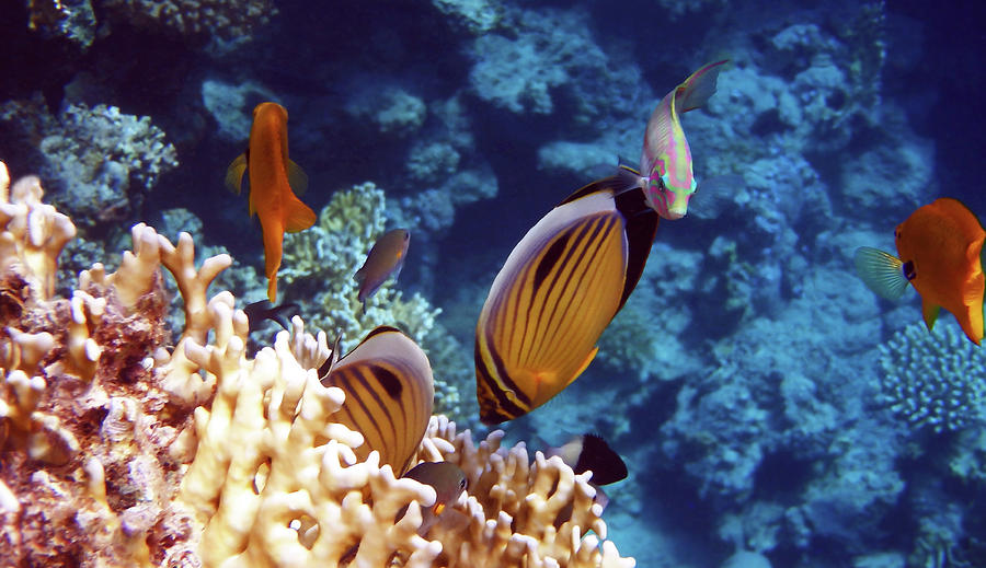 The Best Of The Red Sea by Johanna Hurmerinta