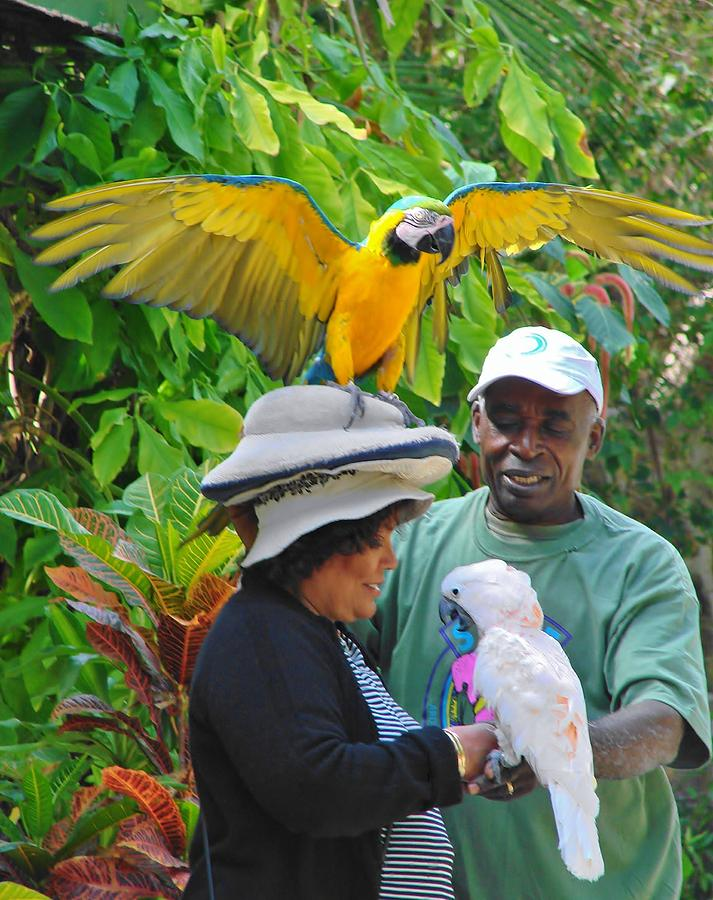 Tropical Photograph - The Bird Lady At Ardastra Gardens by Margaret Bobb