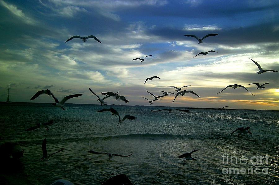 Birds Photograph - The Birds by Tali Turem