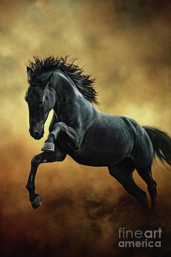 black-stallion-fuck