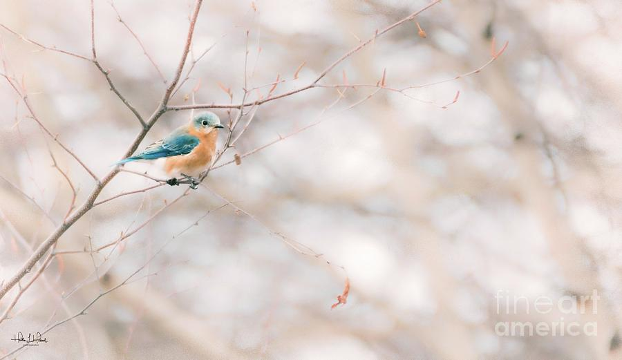 The Bluebird in Birch Photograph by Heather Hubbard