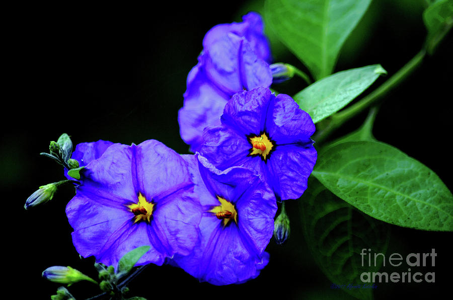 Blue Flowers Photograph - The Blues by Afroditi Katsikis