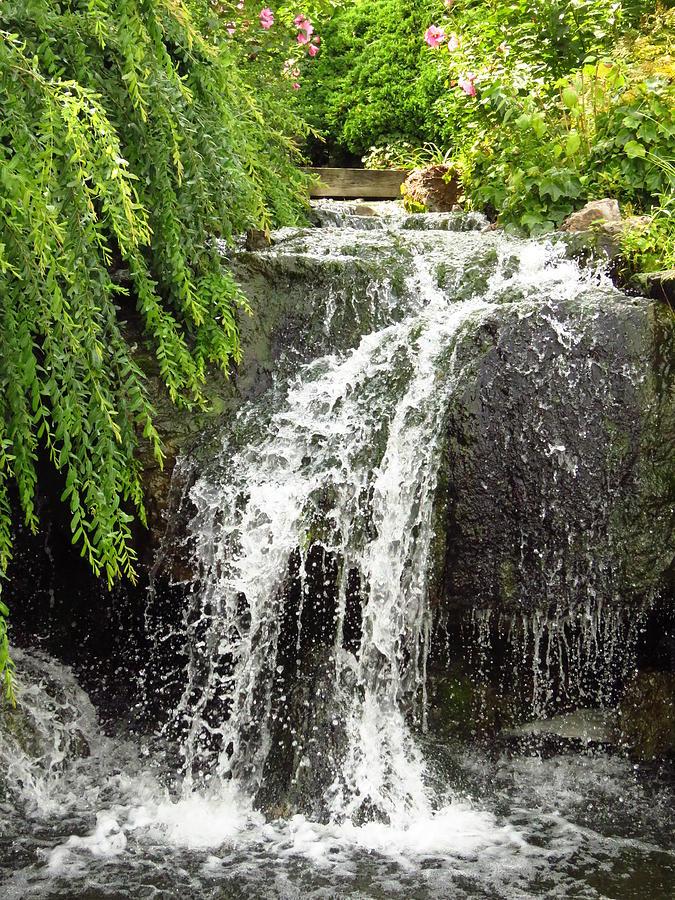 The Botanic Waterfall  Photograph by Lori Frisch