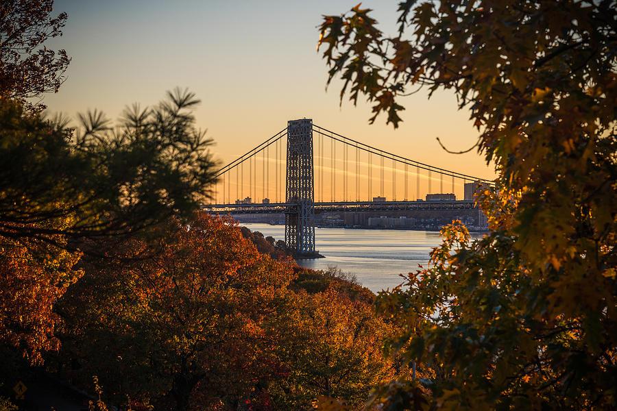 The Bridge Through The Trees Photograph