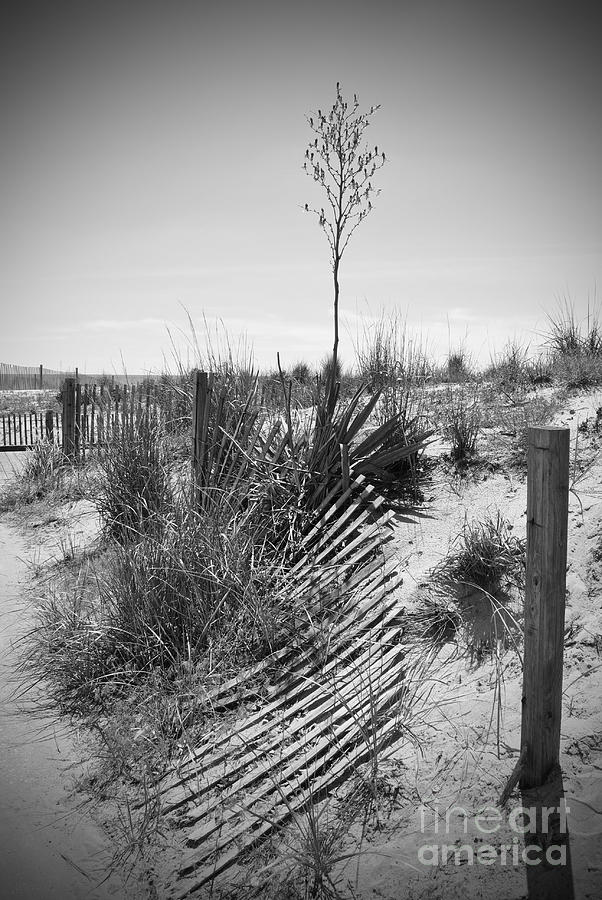 Rehoboth Photograph - The Broken Fence by Jost Houk
