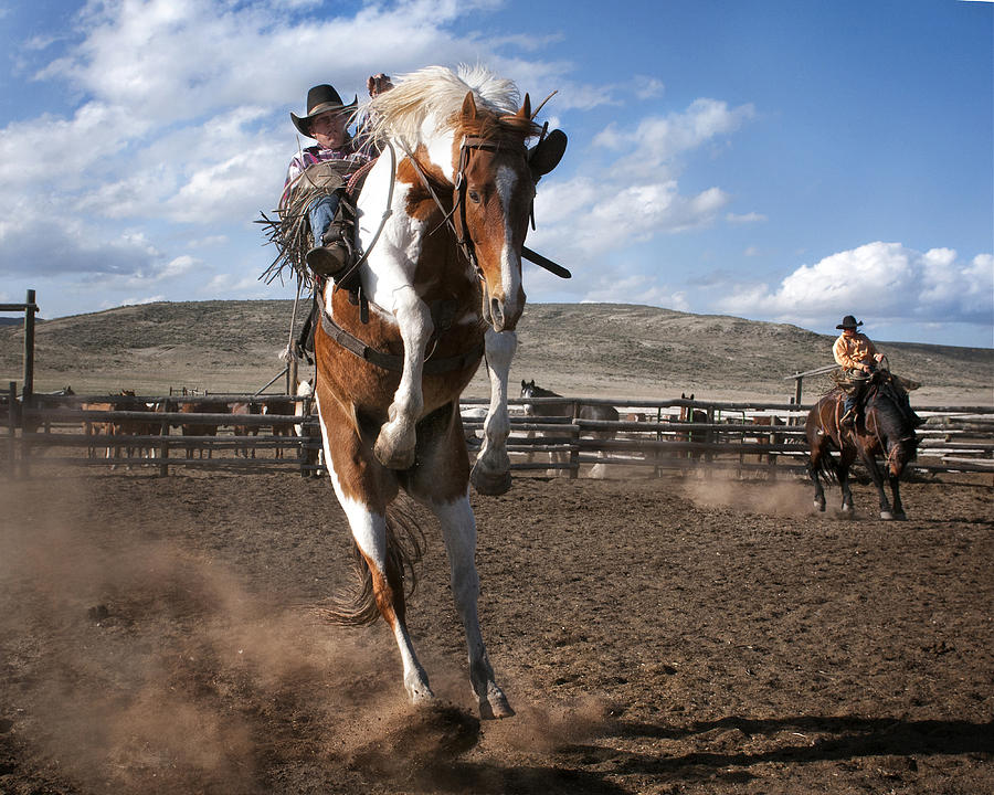 Rodeo Photograph - The Buckout at Sombrero Ranch by Pamela Steege