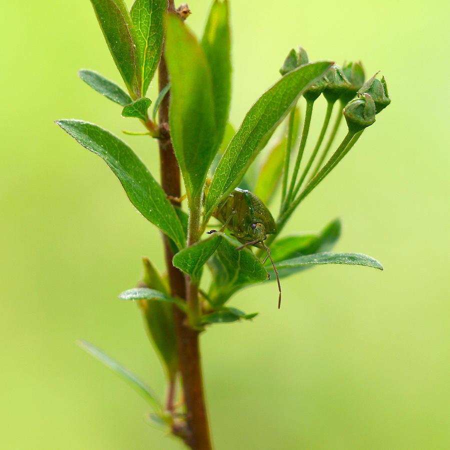 Nokia Photograph - The Bug by Jouko Lehto