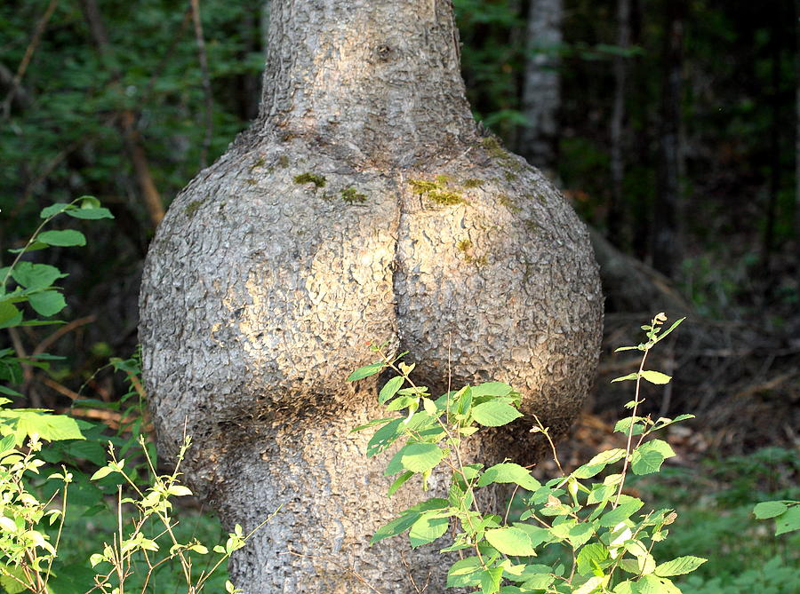 Tree Photograph - The Bum Tree by Gord Patterson