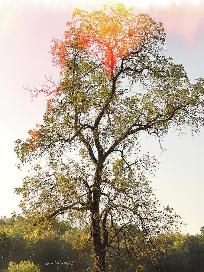 Landscape Photograph - The Burning Tree by Lena Wilhite