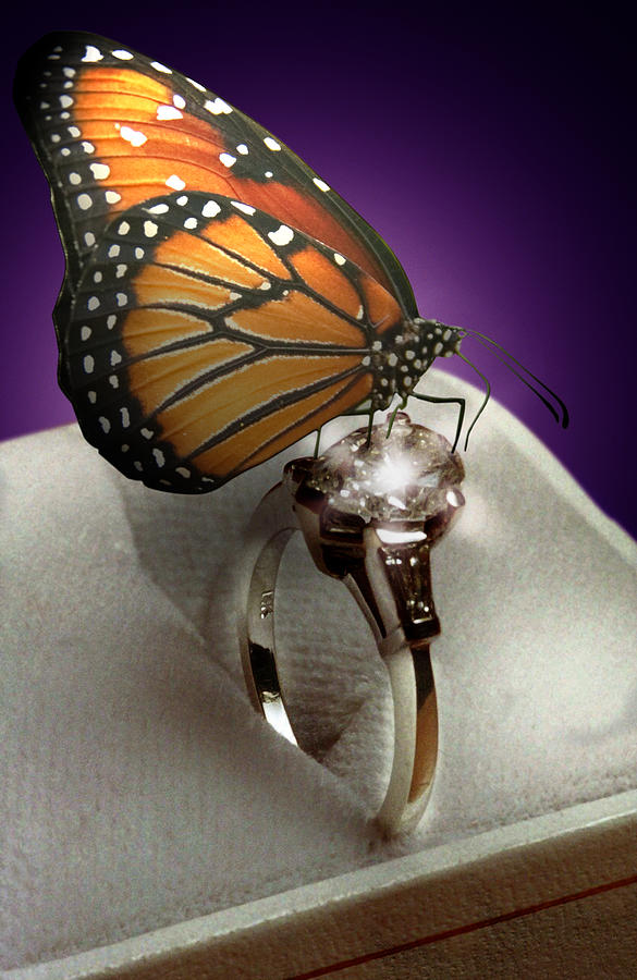 Fantasy Photograph - The Butterfly And The Engagement Ring by Yuri Lev