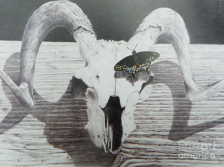 Landscape Drawing - The Butterfly And The Skull by David Ackerson