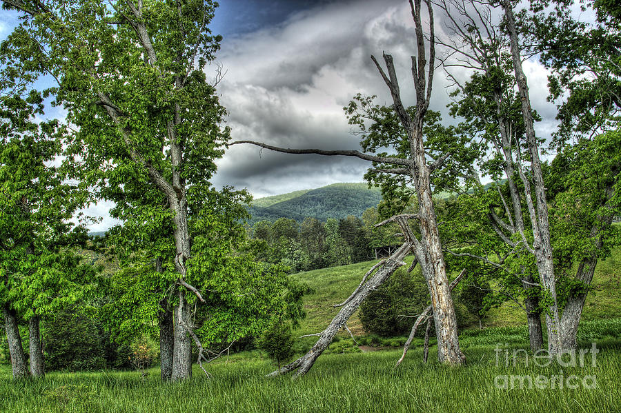 Virginia Photograph - The Buzzard Trees by Pete Hellmann