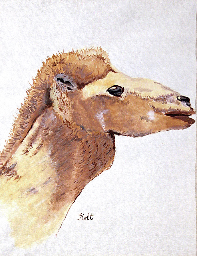 The Camel by Linda Holt