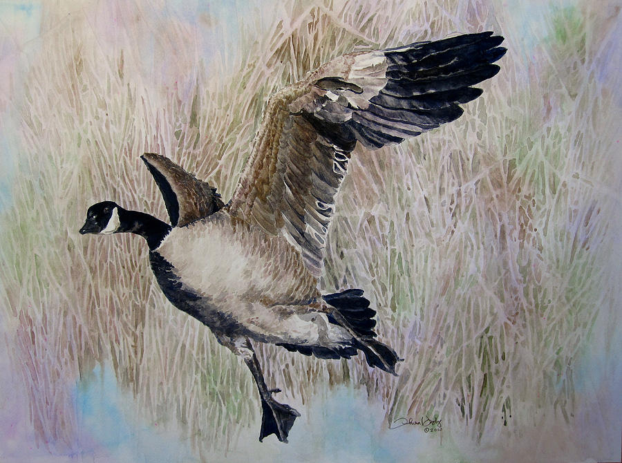 Bird Painting - The Canadian by Theresa Higby