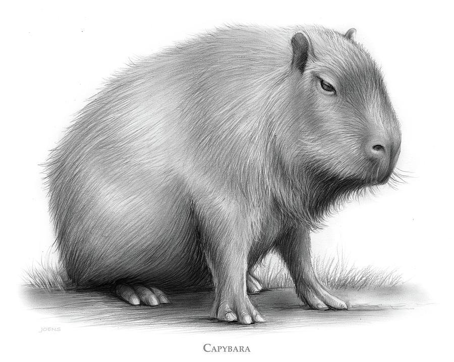The Capybara Drawing