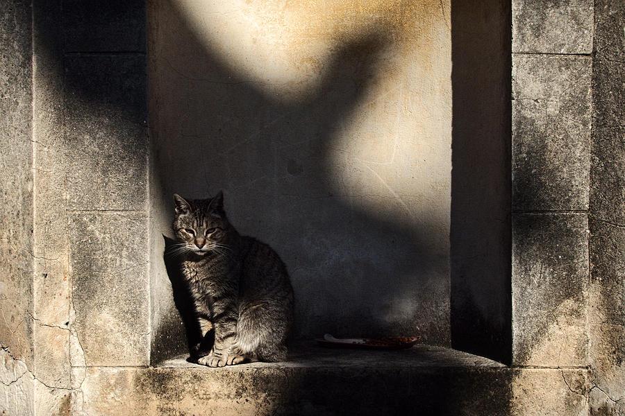 The Cat and the Bird by Osvaldo Hamer
