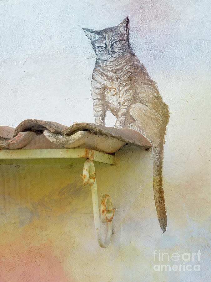 The Cat On The Roof Mural Photograph