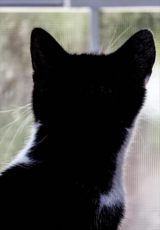 The Cat Photograph